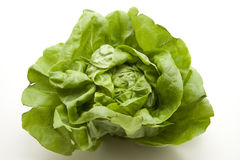 Head lettuce Stock Images
