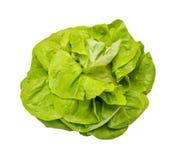 Head lettuce Stock Photos