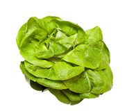 Head lettuce Royalty Free Stock Images