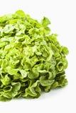 Head of lettuce Stock Photo