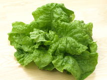 Head of lettuce Stock Photography