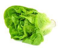 A head of Lettuce Stock Photo
