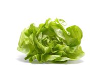 Head of lettuce Royalty Free Stock Images