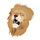 Head Lion Stock Photos