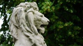 head lion Royaltyfria Bilder