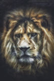 Head of a lion. Against black background Royalty Free Stock Images