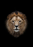 The head of a lion. On a black background Stock Photo