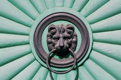 Head of a lion cub holding a door handle in his mouth, front door Stock Image