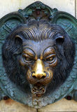 Head of a lion head Stock Photo