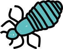 Head louse Stock Photos