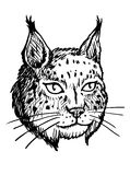 Head of Lynx - Black and White Illustration Royalty Free Stock Photo