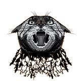 Head lynx. Lynx head with an open mouth on a white background Royalty Free Stock Image