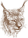 head of lynx Royalty Free Stock Photography