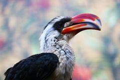 Head of a male decken hornbill in profile view. Head of a male decken hornbill tockus deckeni in profile view in front of a blurry floral background Royalty Free Stock Photography