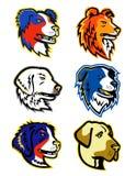 Head maskotsamling för fårhundar Royaltyfri Foto