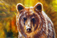Head of mighty brown bear, oil painting on canvas and graphic collage. Eye contact. Royalty Free Stock Image
