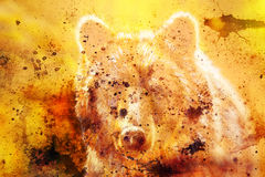 Head of mighty brown bear, oil painting on canvas and graphic collage. Eye contact. Head of mighty brown bear, oil painting on canvas and graphic collage. Eye Royalty Free Stock Photography