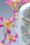 head modell för akupunktur Royaltyfri Fotografi