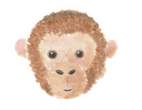 Head of a monkey. Royalty Free Stock Image