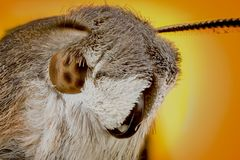 Head of moth macro. Portrait Head of moth macro or micro photography stock photo