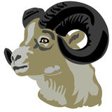 Head of the mountain ram Stock Photo