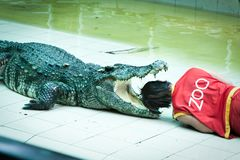 Head in the mouth of the crocodile. Deadly trick. Royalty Free Stock Photo