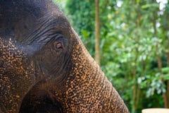 Head närbild för elefant Arkivbilder