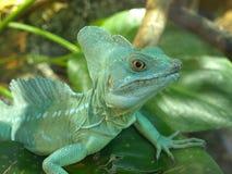 The green lizard. royalty free stock photos