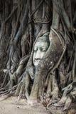 Head Of Buddha Image In The Tree, Ayutthaya, Thailand. Unesco World Heritage Site Stock Photo