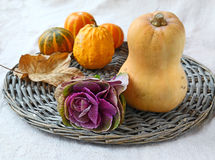 Head of ornamental cabbage and pumpkins Stock Photo