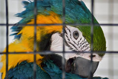 Head of a parrot Stock Photo