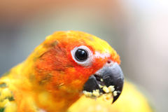 Head of parrot is eating foods on tree branch. Stock Photography