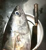 Head piece of big tuna fish and knife Stock Photo