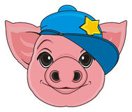 Head of pig in cap Royalty Free Stock Photos