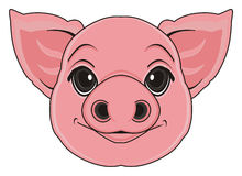 Head of pig Stock Photography