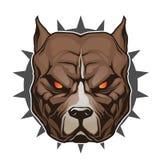 head pitbull Royaltyfri Illustrationer