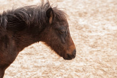 Head pony Stock Photos
