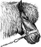 Head of a pony Stock Photography