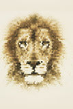 The head portrait of Lion Royalty Free Stock Photography