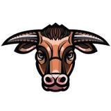 Head of powerful horned bull Stock Image