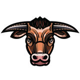 Head of powerful horned bull Stock Photography