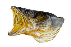 Head of predatory fish Royalty Free Stock Image