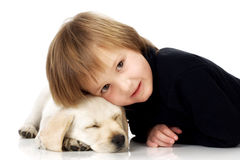 Head on puppy. Child lying with head on sleeping Labrador retriever puppy Stock Images