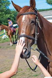 Head racehorse. Children's hands stroking his head racehorse Royalty Free Stock Photos