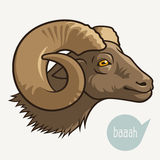 Head of ram Royalty Free Stock Photo