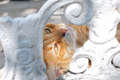 Head of red cat through a hole in a fence Royalty Free Stock Images