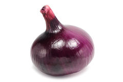 Head of red onion Stock Photography
