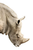 Head of rhinoceros Royalty Free Stock Images