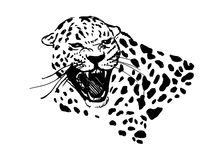 Head of roaring jaguar. Hand sketch head roaring jaguar. Vector illustration Royalty Free Stock Images