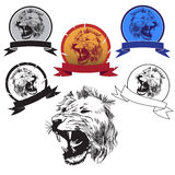 Head roaring lion. Image of the head of a wild animal of the cat family Royalty Free Stock Image